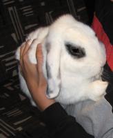 kaninenplet